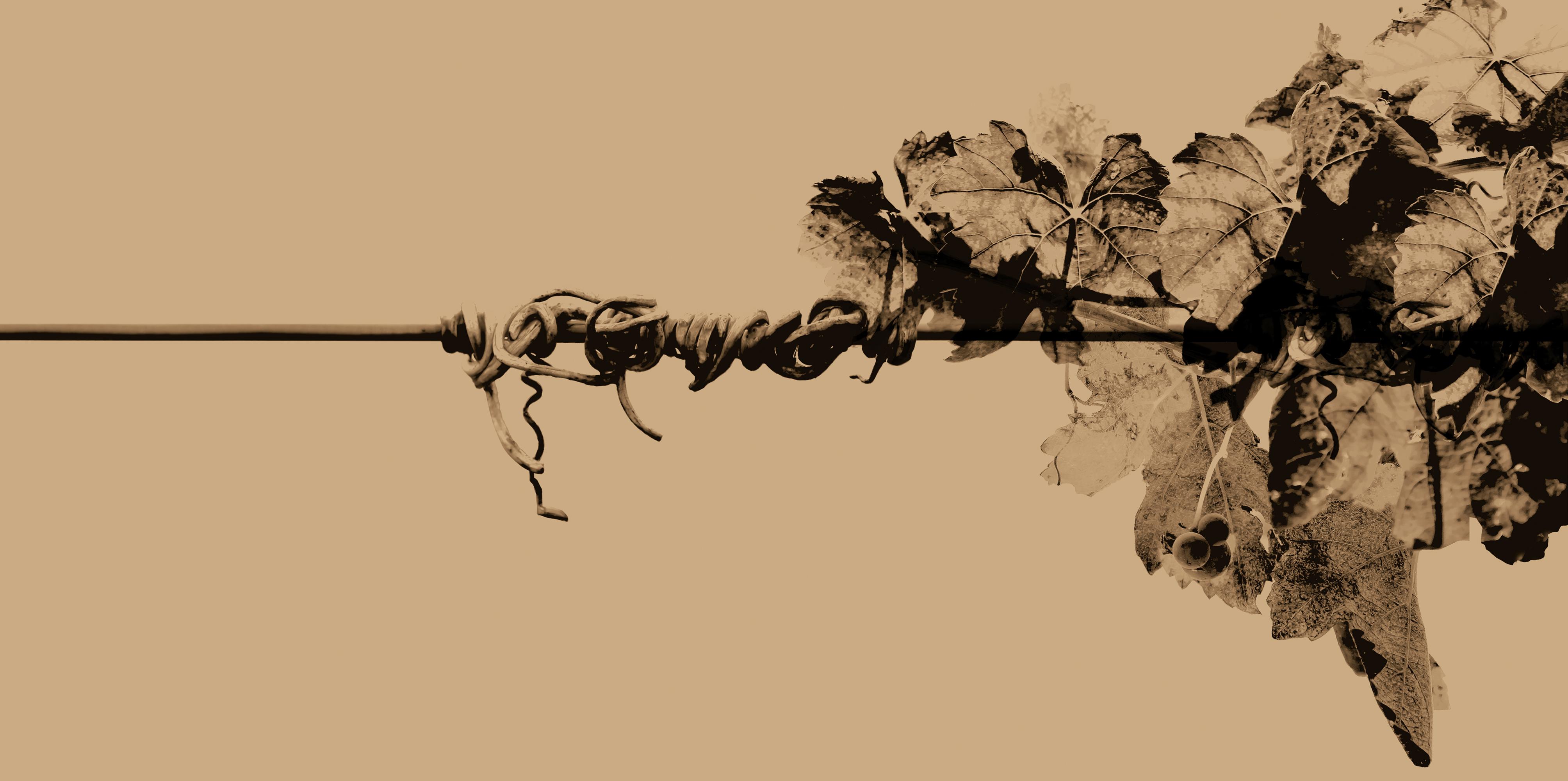 diseño imagen Bodegas Coviñas